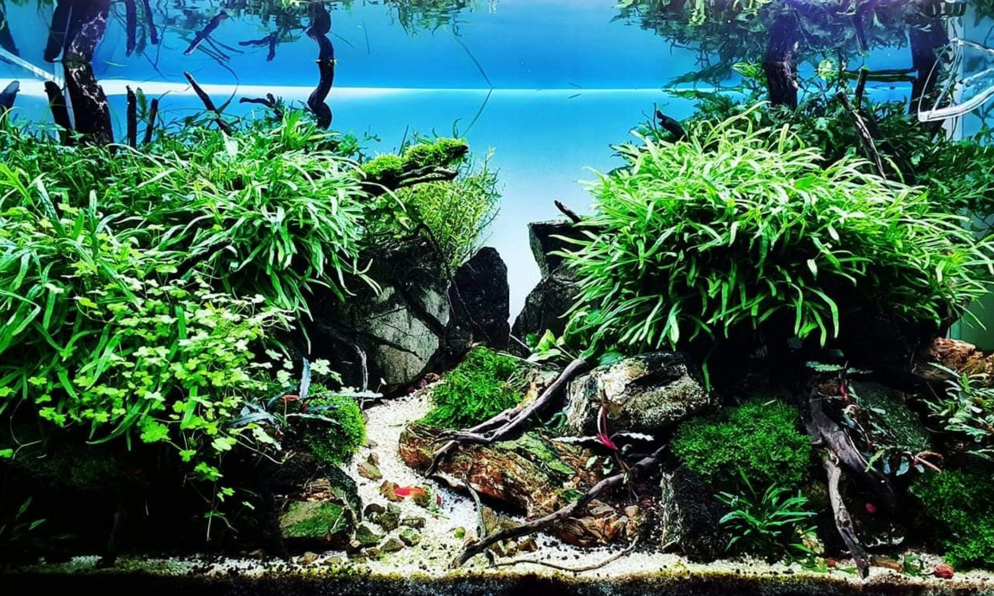 Aquascaping France